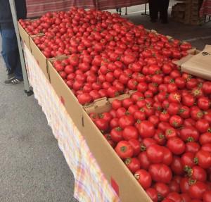 Tasty Tomatoes!